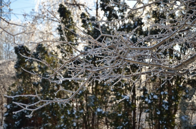 Ice branch Heather Telford